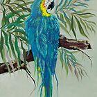 Macaw by Sarah Jurgens