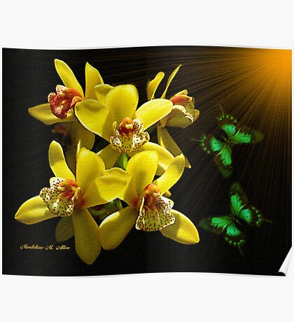 ~ ORCHID JOY ~ Poster