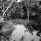 Water Scene B&W by SharonD