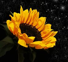Starlight Sunflower by Judy Vincent