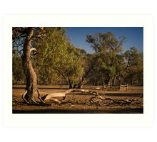 Well Fence and Red Gums Art Print
