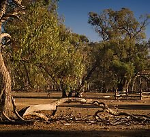 Well Fence and Red Gums by daveoh