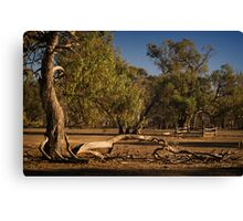 Well Fence and Red Gums Canvas Print