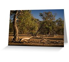 Well Fence and Red Gums Greeting Card