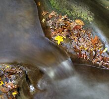 Fall Creek Gorge - Water & Leaves by Jeff VanDyke