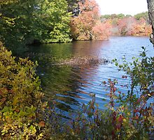 Autumn in Rhode Island | Barbers Pond Shallows by Jack McCabe
