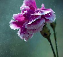 Drinking Rain. by Sherstin Schwartz