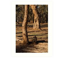 Barmah State Forest Red Gums Art Print