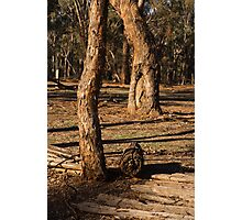 Barmah State Forest Red Gums Photographic Print