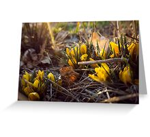 Early Spring Flowers Greeting Card