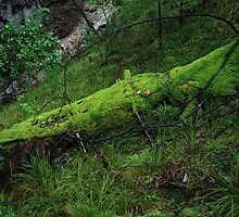 Moss covered log, Lake Cave, Margaret River, Western Australia by Adrian Paul