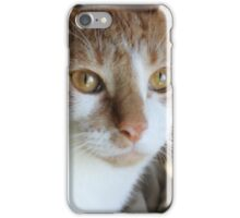 Here kitty kitty iPhone Case/Skin