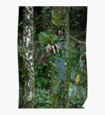 Rain Forest Trees Poster