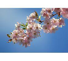 First Springtime Beauties Photographic Print