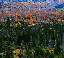 White Mountains Landscape: Fall Foliage and Mountain Spruce by Richard VanWart