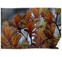 Flora - Australian - Kangaroo Paw on Location Poster