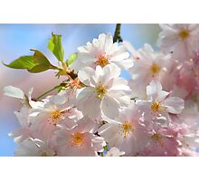 Hello Again Springtime Photographic Print