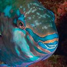 Kian Mesaki Parrot Fish by Michael Powell