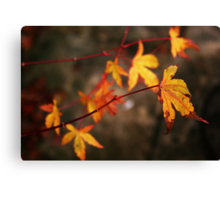 Weeping Autumn Canvas Print