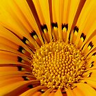 Flower Centre by Annie Austin