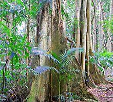Strangler Fig, Bruxner Park Flora Reserve, Coffs Harbour, NSW, Australia by Adrian Paul