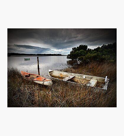 Hidden among the Reeds Photographic Print
