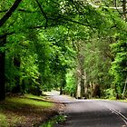 The Avenue near Breenhold - Mt Wilson NSW Australia by Bev Woodman