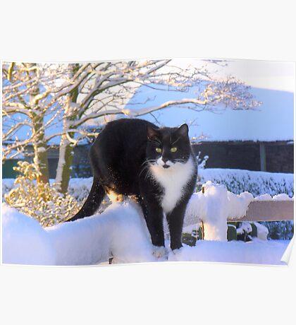 Snow Cat Poster
