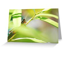Peeking Hopper Greeting Card
