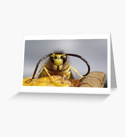 Yellow Jacket on leaf Greeting Card