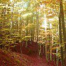 Autumn light by Sugarchoco