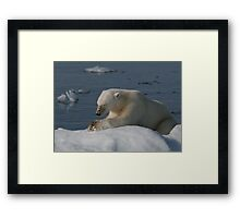 Bear Prayer Framed Print