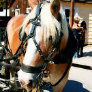 horse, Old Town San Diego, CA  by rmenaker
