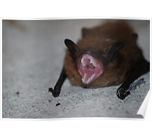 Wounded Bat Poster