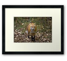 The Red Fox Monkey On My Back Framed Print