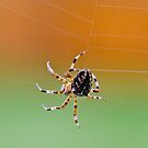 Weaving her Web by David Friederich