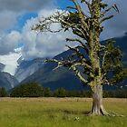 New Zealand Landscape by Bruce Reardon
