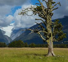 New Zealand Landscape by Bruce Reardon