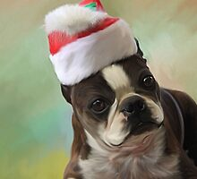 Amby christmas by Cazzie Cathcart