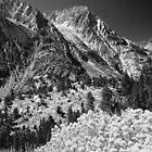 WILDFLOWERS BELOW MOUNTAINS by Chuck Wickham