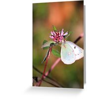 Pink Clover And Friend Greeting Card