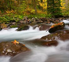 Autumn Surge by DawsonImages