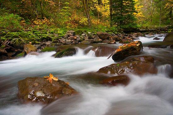 Autumn Surge by DawsonImages