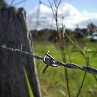 fenced in by erattik