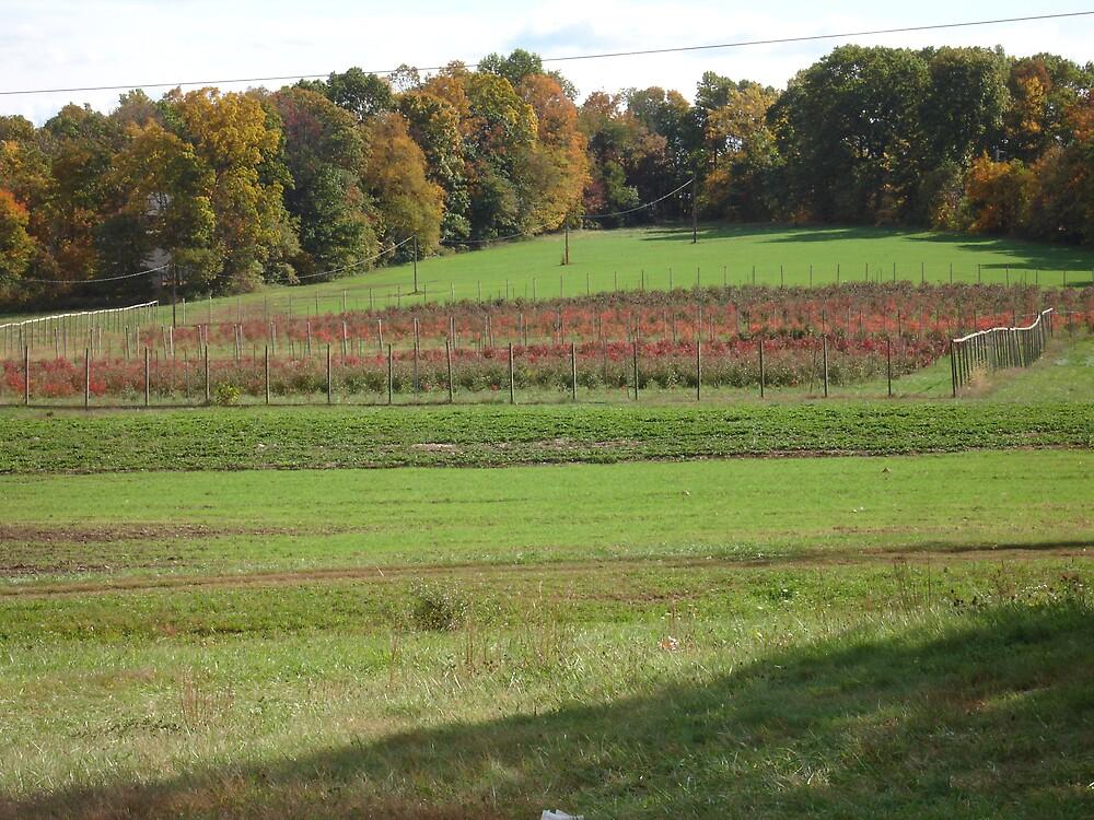 Rasberry land by rudyrude