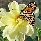 Butterfly Visit  by Diane Trummer Sullivan
