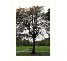 Autumnal Tree Art Print