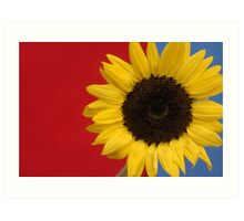 Primary Sunflower Art Print