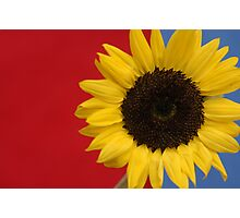 Primary Sunflower Photographic Print