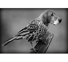 ..HE'S A BIRD DOG..LOL..  Photographic Print